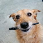 dog_pen